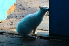 Reizende Frau von Katzen Lizenzfreie Stockfotos