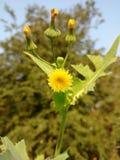 Reizende gelbe Blumen lizenzfreies stockbild