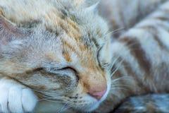 Reizende gestreifte Katze der Nahaufnahme Lizenzfreies Stockbild