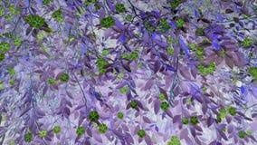 Reizende grüne Blumen für Hintergrund Stockbild