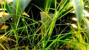 Reizende grüne grasss Lizenzfreie Stockfotografie