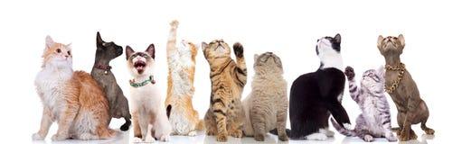 Reizende große Gruppe Katzen, die oben zur Seite schauen stockfotos