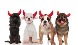 Reizende Gruppe von vier netten Hunden gekleidet als Teufel lizenzfreies stockfoto
