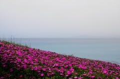 Reizende helle rote Blumen auf Küste der Halbinsel von Kassandra, auf dem Ägäischen Meer lizenzfreie stockbilder