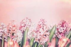 Reizende Hyazinthen blüht mit bokeh auf Pastellrosahintergrund, Draufsicht Frühjahr und Gartenarbeit lizenzfreie stockfotos