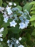 Reizende Iris Stockbilder