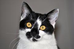 Reizende Katze stockfotografie