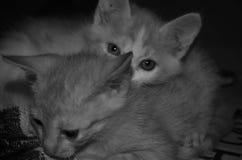 Reizende Katze Lizenzfreies Stockbild