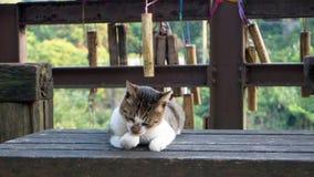 Reizende Katze auf der Bank Stockbild