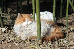 Reizende Katze, die unter Bambussen schläft lizenzfreie stockfotografie