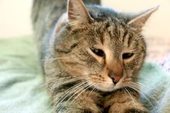 Reizende Katze gerade aufwachen stockfoto