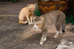 Reizende Katze an im Freien Lizenzfreies Stockfoto