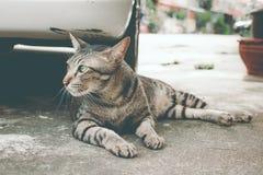 Reizende Katze an im Freien Lizenzfreies Stockbild