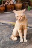 Reizende Katze an im Freien Stockfoto
