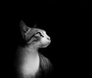 Reizende Katze im schwarzen Hintergrund Stockfoto