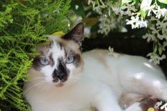 Reizende Katze in meinem Garten Stockfoto