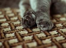 Reizende Katzenfüße lizenzfreie stockfotografie