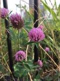 reizende kleine Blume Stockbild