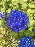 reizende kleine Blume Stockfotos