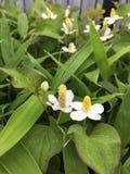 reizende kleine Blume Lizenzfreies Stockfoto