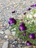 reizende kleine Blume Lizenzfreie Stockfotos