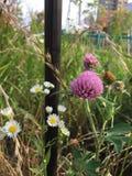 reizende kleine Blume Lizenzfreies Stockbild