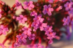 Reizende kleine Blume Lizenzfreie Stockfotografie