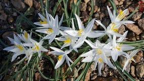 Reizende lillies Stockfotos