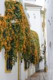 Orange Blüten auf Weiß Lizenzfreies Stockbild