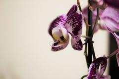Reizende Orchideen Stockbild