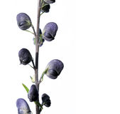 Reizende purpurrote Blumen Lizenzfreies Stockbild