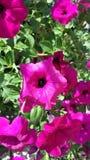 Reizende rosa Blume Lizenzfreies Stockfoto