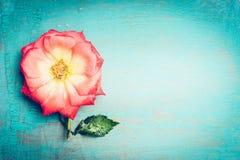 Reizende rosa Blume auf schäbigem schickem Hintergrund des blauen Türkises, Draufsicht, Platz für Text Festliche Grußkarte Lizenzfreie Stockfotografie