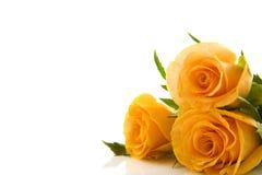 Reizende Rosen stockfotos