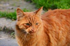 Reizende rote Katze auf Straße Stockfoto