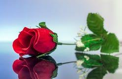 Reizende rote Rosen-Blume, die über Glastisch nachdenkt Lizenzfreie Stockfotografie