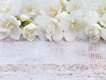 Reizende süße Spott-orange Blumen Stockfotos