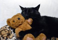 Reizende schwarze Katze mit einem Teddybären lizenzfreies stockfoto