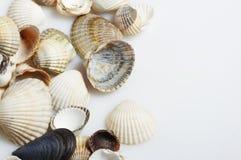Reizende Seashells gegen stockfotografie
