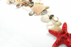 Reizende Seashells gegen Stockfoto