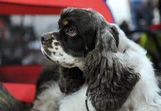 Reizende Tiere an der Hundeshow lizenzfreie stockbilder