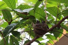 Reizende Vögel stockfotografie