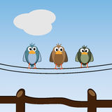 Reizende Vögel, die sich draußen entspannen Lizenzfreie Stockfotografie