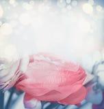 Reizender Blumenhintergrund mit bokeh in der Pastellfarbe Stockfoto