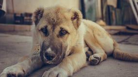 Reizender einsamer Hund, der auf dem Boden legt lizenzfreie stockbilder