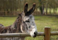 Reizender Esel Lizenzfreies Stockfoto