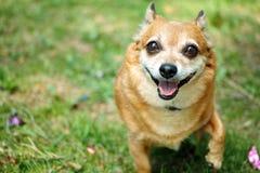 Reizender Hund Lizenzfreie Stockfotos