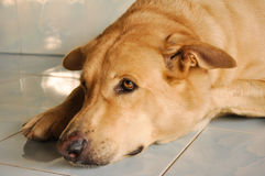 Reizender Hund Stockbild
