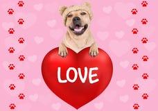 Reizender Hund, der mit den Tatzen auf großem Valentinsgruß ` s Tagesherzen mit Text Liebe auf rosa Hintergrund mit Herzen und Fu stockfoto