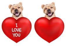 Reizender netter Hund mit dem großen Valentinsgruß ` s Tagesherzen, lokalisiert auf weißem Hintergrund stockfotografie